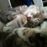 Chillin Kitty